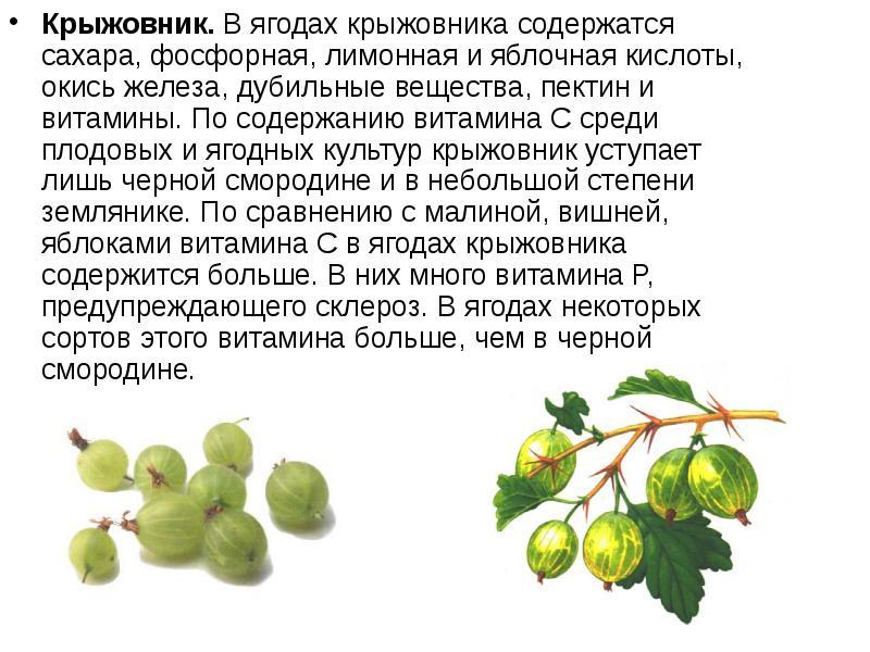Какие овощи и фрукты можно есть при диабете