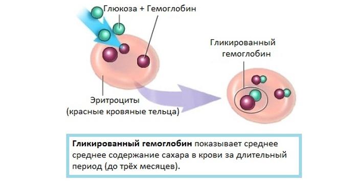 Анализ крови на гликированный гемоглобин подготовка Справка из травмпунктаметро Старая деревня